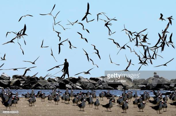Birds fly over a man fishing days after a BP announcement that it is ending its active cleanup on the Louisiana coast from the Deepwater Horizon oil...