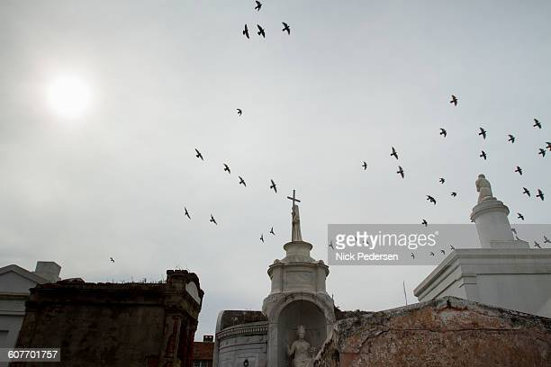 birds fly over saint louis cemetery - endopack stock pictures, royalty-free photos & images