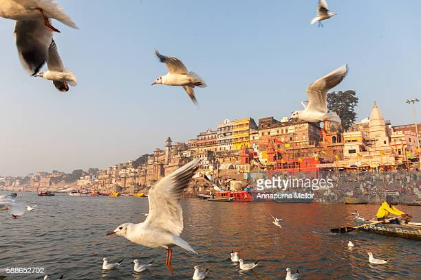birds fly over varanasi, india - uttar pradesh stock pictures, royalty-free photos & images