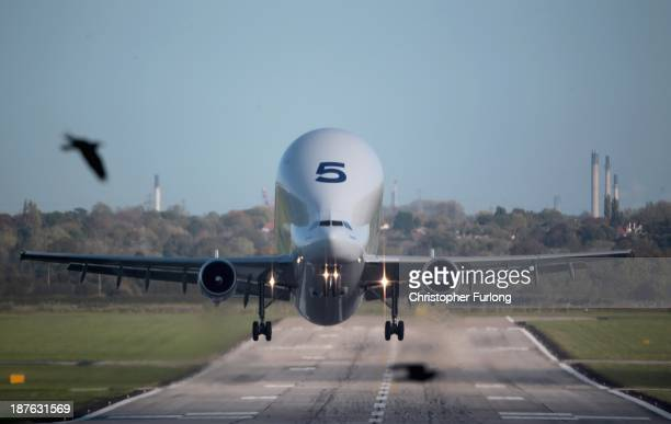 Birds fly past an Airbus A300 Beluga aircraft loaded with wings as it takes off from the Airbus SAS wing assembly factory on November 7 2013 in...