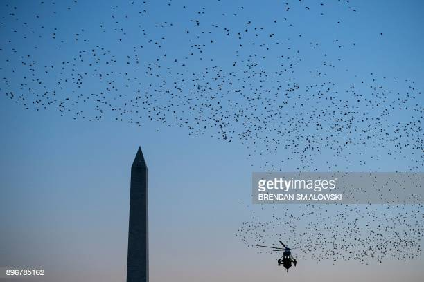 Birds fly past as Marine One with US President Donald Trump lands on the South Lawn of the White House December 21 2017 in Washington DC / AFP PHOTO...