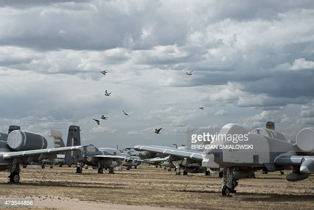 Birds fly past Fairchild Republic A10 Thunderbolt II aircraft stored in the boneyard at the Aerospace Maintenance and Regeneration Group on...
