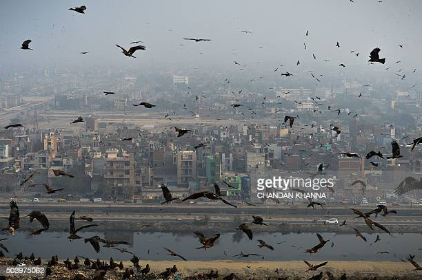 Birds fly through a cloud of pollution which envelops aresidential area near the Anand Vihar District of New Delhi on January 8 2016 AFP PHOTO /...