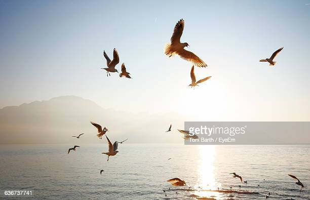 Birds Flying Above Sea