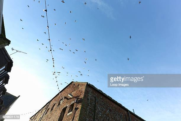Birds flying above the roof tops Wells next the Sea England