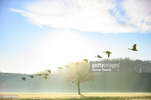 birds flying against a bright sky - rural scene stock pictures, royalty-free photos & images