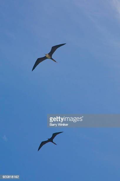 Birds flying against clear blue sky in Mexico