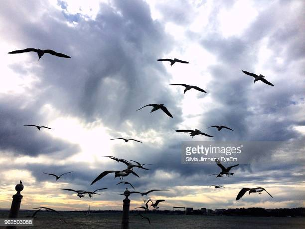 Birds Flying Against Cloudy Sky During Sunset