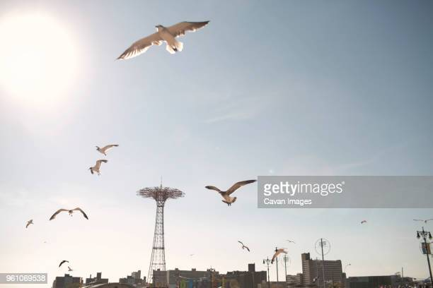 birds flying against sky in coney island on sunny day - ブルックリン コニー・アイランド ストックフォトと画像