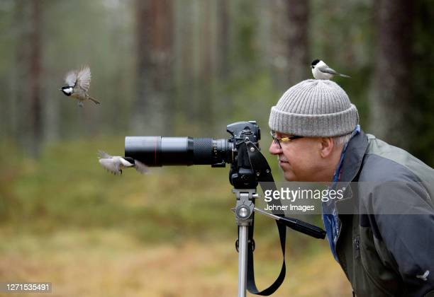 birds flying around photographer - hat stock pictures, royalty-free photos & images