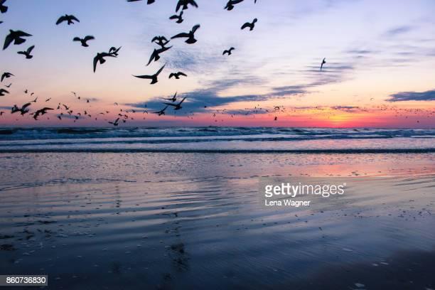 Birds Flying Ashore During Sunrise