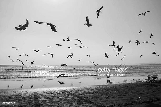 Birds Flying At Beach