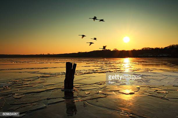 birds flying at frozen lake - köpenick stock pictures, royalty-free photos & images