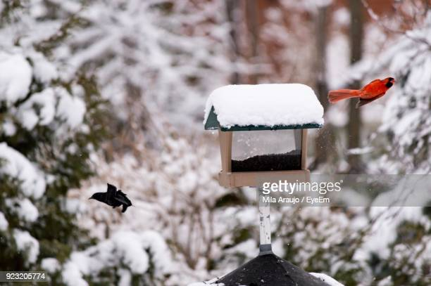 Birds Flying By Snow Covered Birdhouse