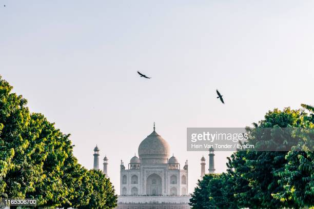 birds flying by taj mahal against sky - india stock pictures, royalty-free photos & images