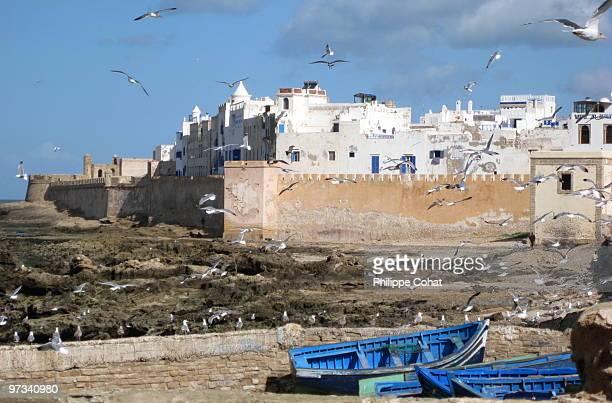 Birds flying, Essaouira, Morocco.