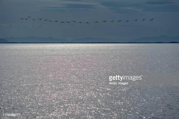 birds flying, flatey in breidafjordur fjord, west fjords, iceland - seascape - fotografias e filmes do acervo