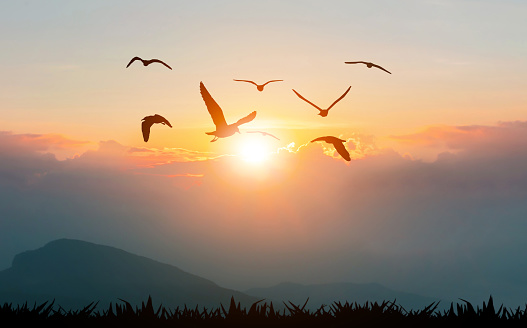 Birds flying freedom on the mountains and sunlight silhouette 1148323720