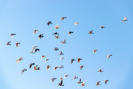 Birds flying freely in the sky 1092229146