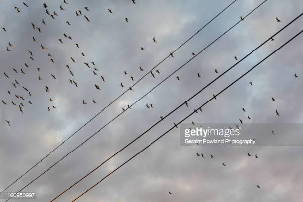 birds flying high - schrägansicht stock-fotos und bilder