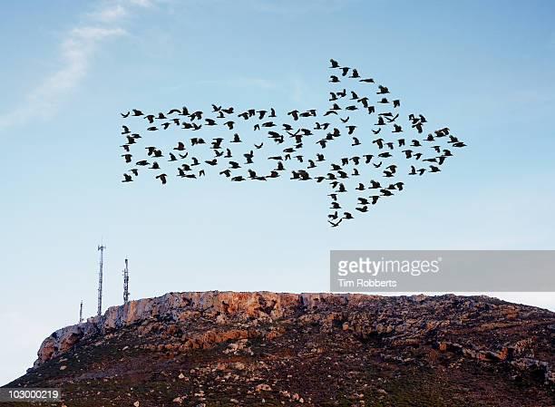 birds flying in arrow formation above aerials. - begeleiding stockfoto's en -beelden