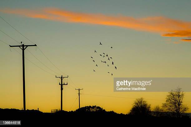 birds flying in evening sky - catherine macbride stock pictures, royalty-free photos & images