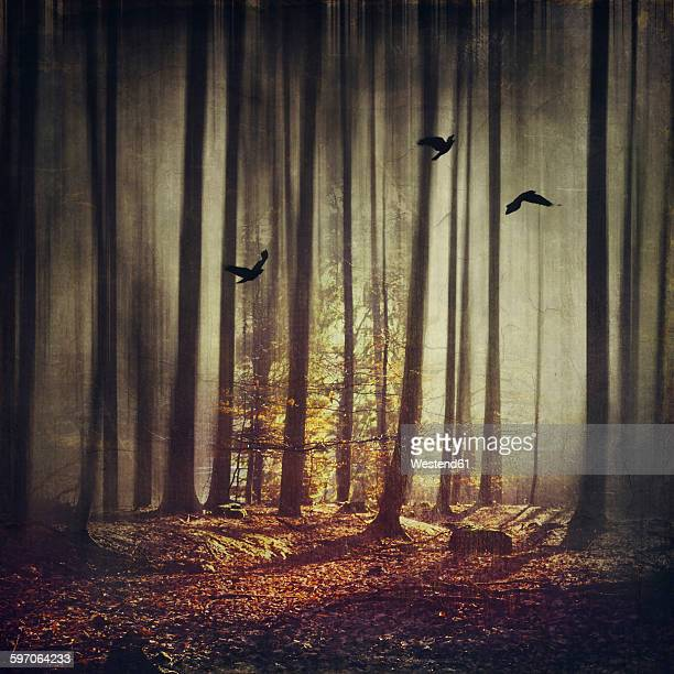 Birds flying in forest