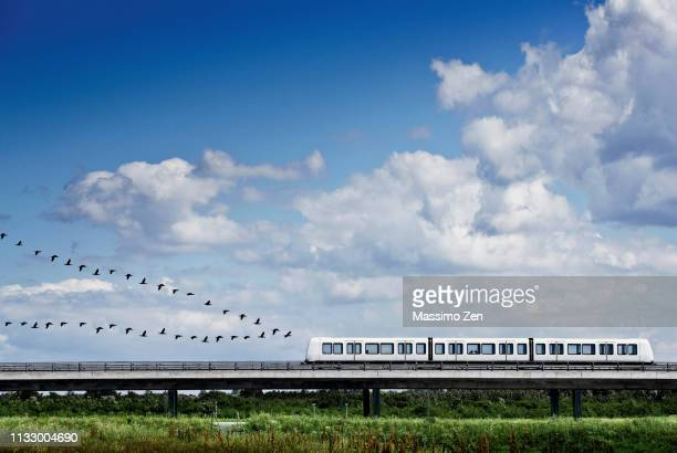 birds flying in formation behind train - animal behaviour stock pictures, royalty-free photos & images