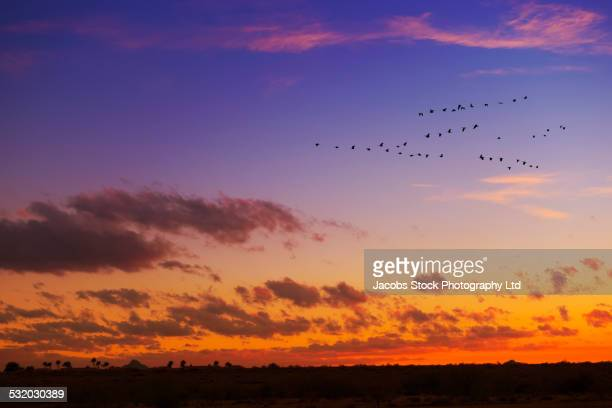 Birds flying in formation in dramatic sunset sky