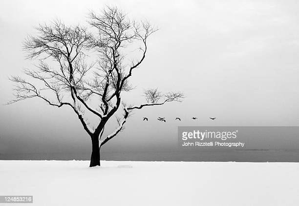 birds flying in sky at winter - westport connecticut stock photos and pictures