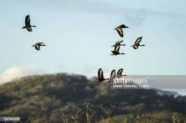 birds flying in sky - marek stefunko stock photos and pictures