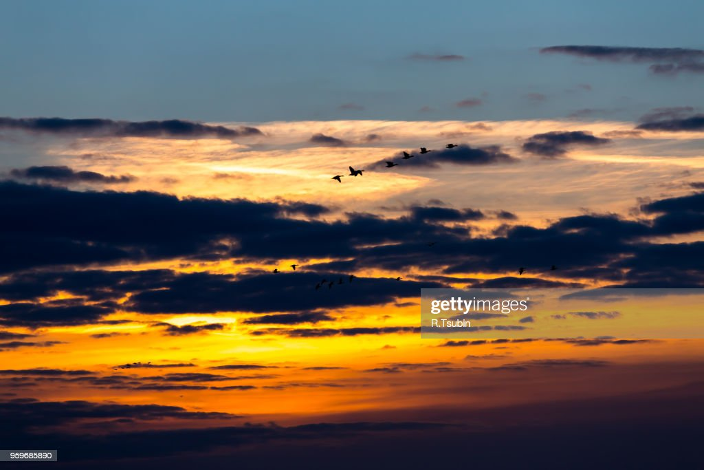Birds flying in sunset against the evening sky : Stock-Foto