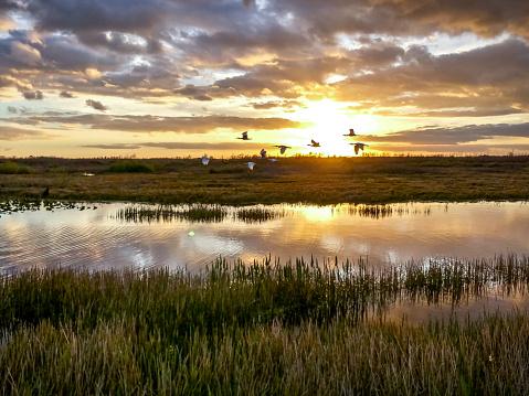 birds flying in the sunset swamp 924703250