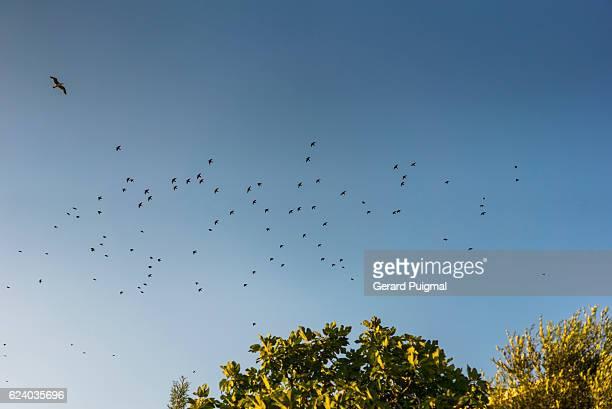 Birds flying on a clear blue sky