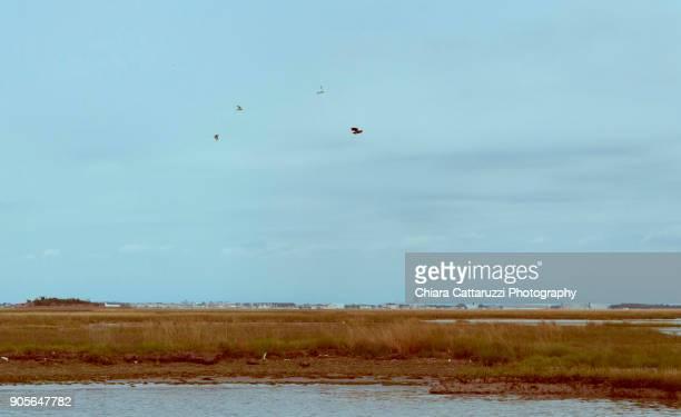 Birds flying on a the blue lagoon