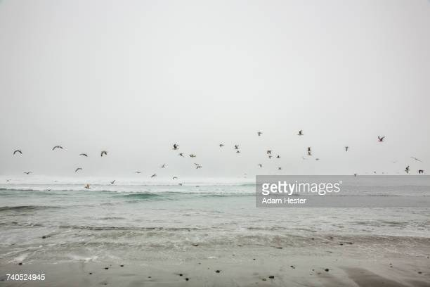 Birds flying on ocean beach
