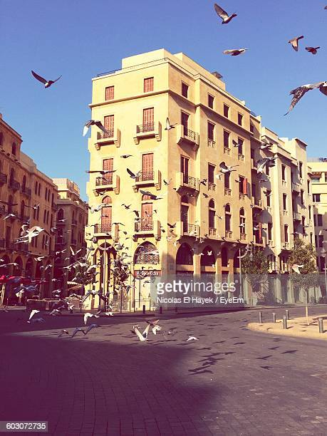 birds flying on road with buildings against clear sky - beirut stock pictures, royalty-free photos & images