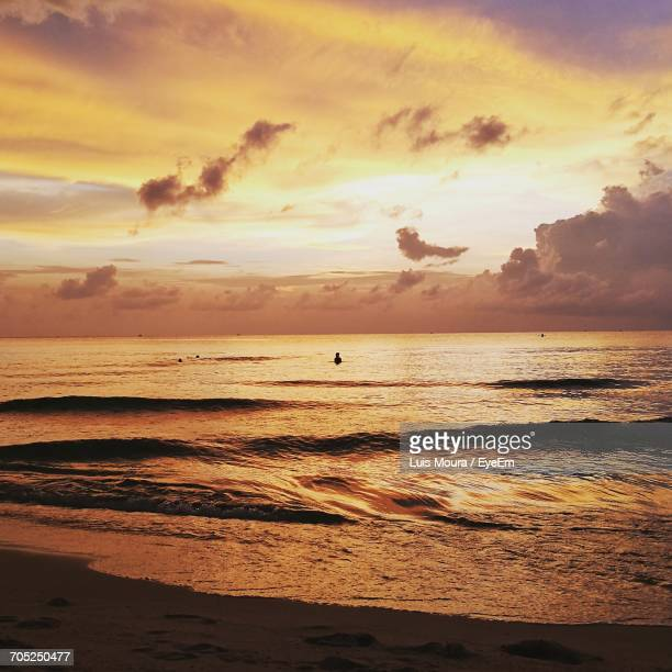 birds flying over beach against sky during sunset - moura stock photos and pictures