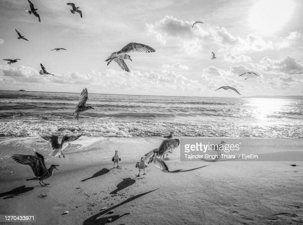 birds flying over beach against sky - bournemouth england stock pictures, royalty-free photos & images