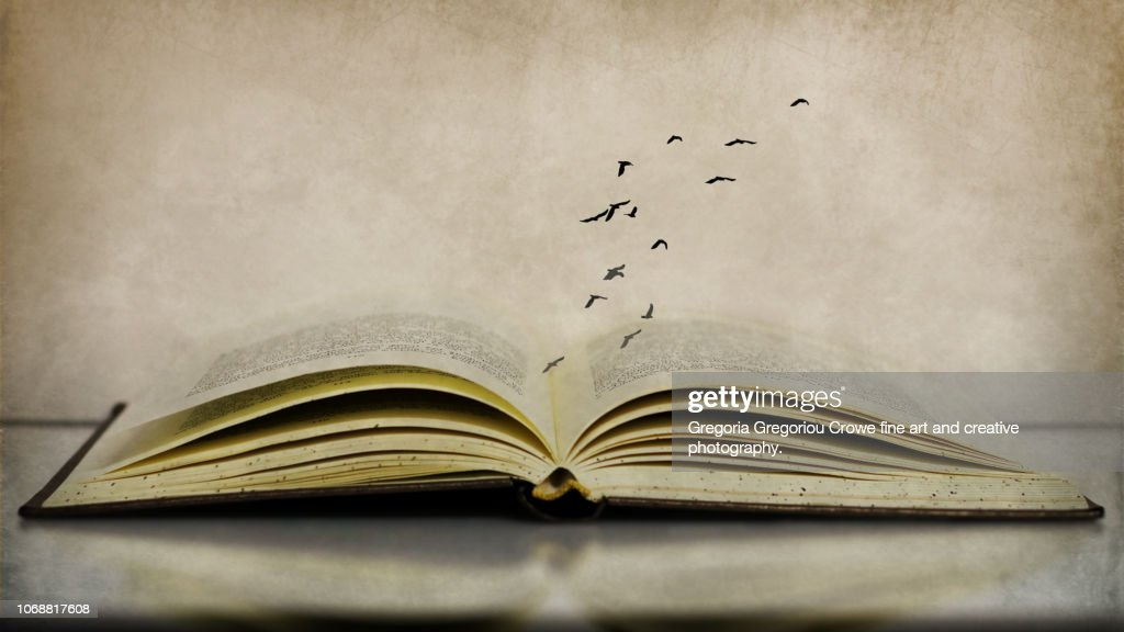 Birds Flying Over Book : Stock Photo