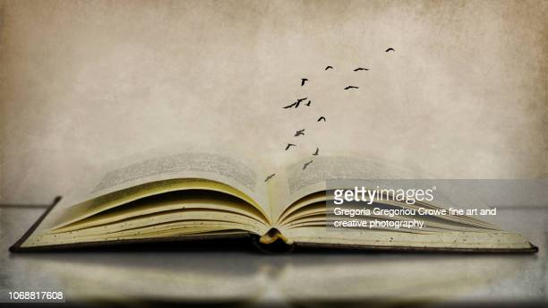 birds flying over book - gregoria gregoriou crowe fine art and creative photography. fotografías e imágenes de stock