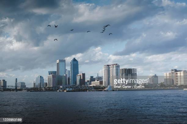 birds flying over buildings in city - jacksonville florida stock pictures, royalty-free photos & images