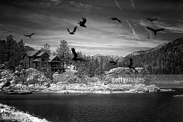 birds flying over calm lake - big bear lake stock pictures, royalty-free photos & images