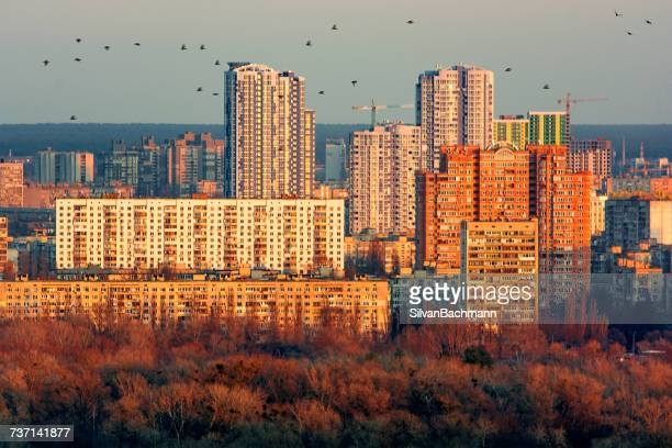 Birds flying over City skyline at night, Kiev, Ukraine