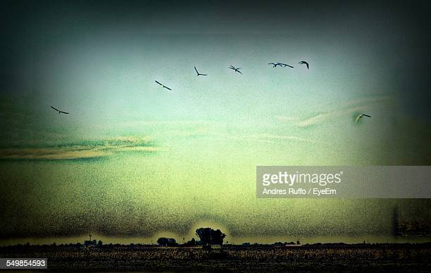 birds flying over field against sky at dusk - andres ruffo stock-fotos und bilder