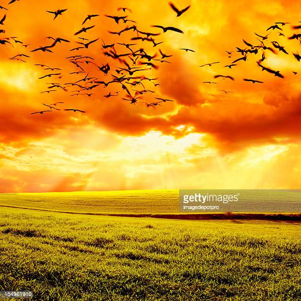 birds flying over field and sunset
