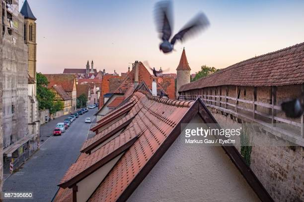 birds flying over houses against sky - rothenburg stock photos and pictures