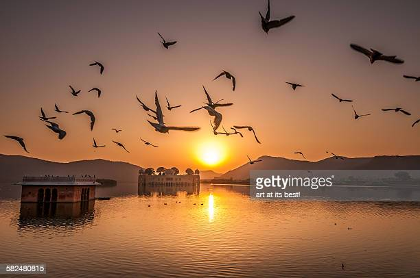 Birds flying over Jai Mahal at sunrise