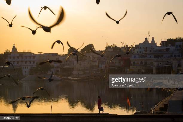 birds flying over lake against sky during sunset - pushkar stock pictures, royalty-free photos & images