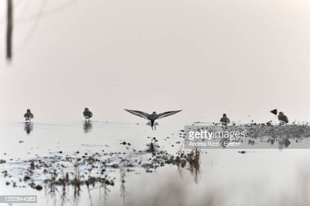 birds flying over lake against sky - andrea rizzi stockfoto's en -beelden